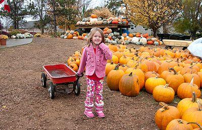 Blpickin pumpkins