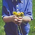 Drews flowers